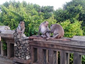 Monkeys at Uluwatu.