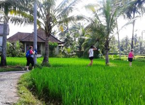 Morning walk through the rice fields.