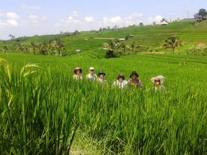 Walking through the famous rice fields at Jatiluwih.